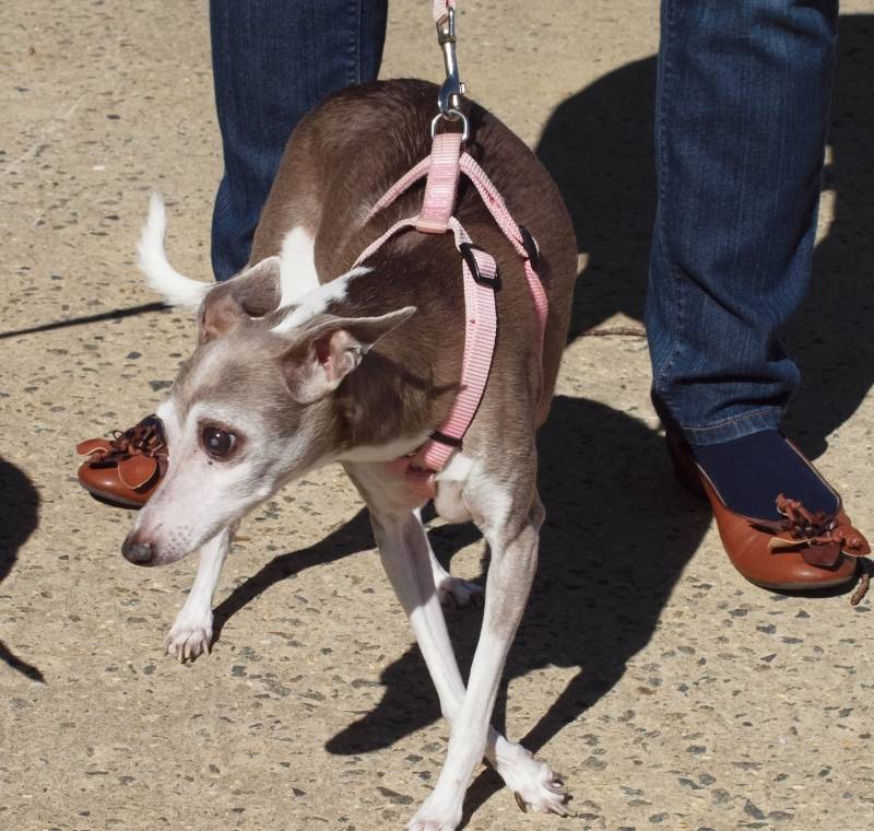 Blessing of the Animals 10-11-2015 002