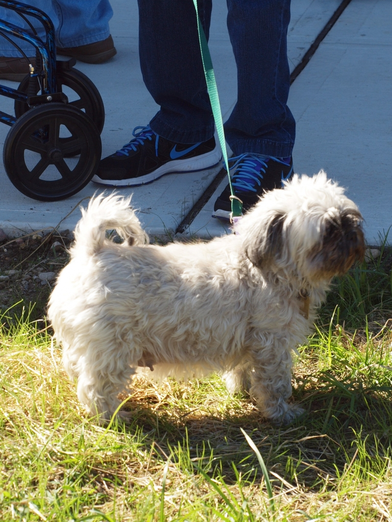 Blessing of the Animals 10-11-2015 006