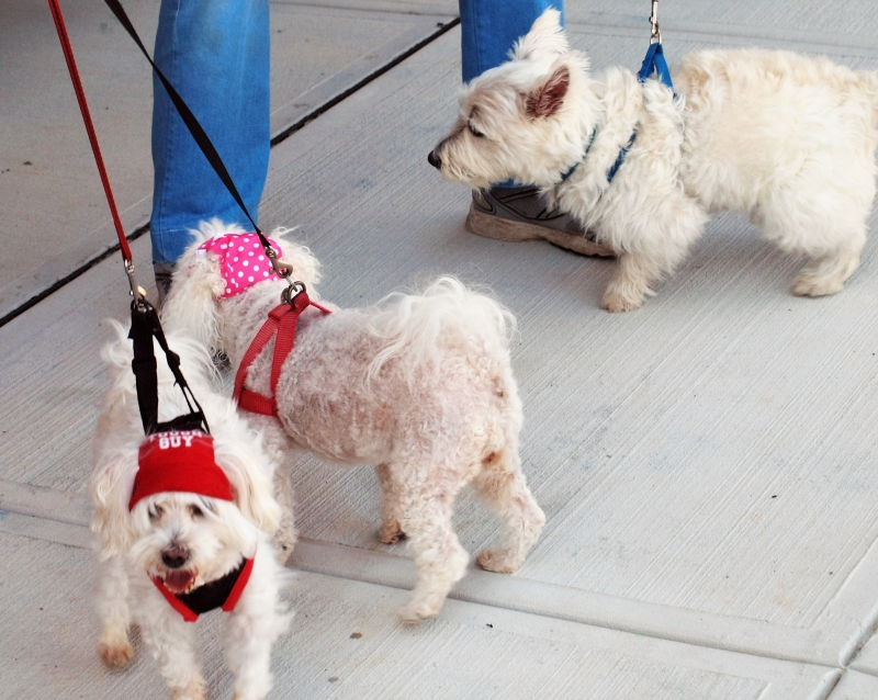 Blessing of the Animals 10-11-2015 013